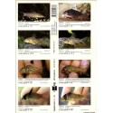 AQUALOG SUPPL. CORYDORAS 3